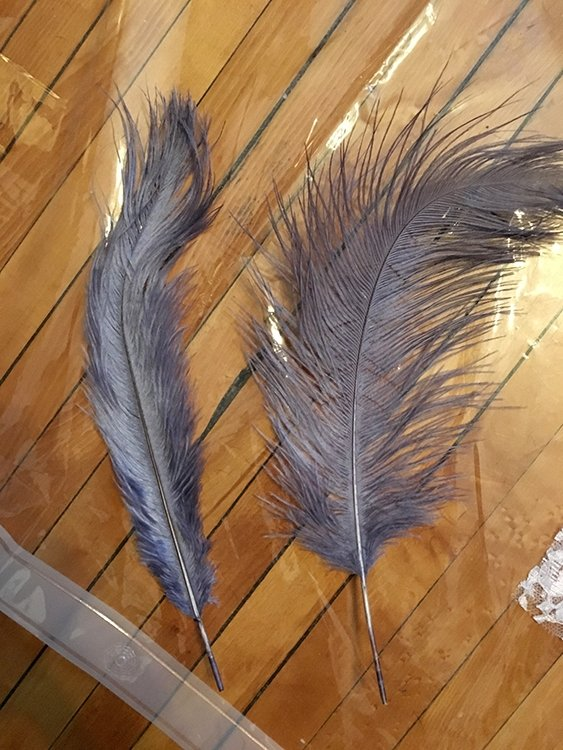 Grey feathers Saint Paul Minnesota Photographer