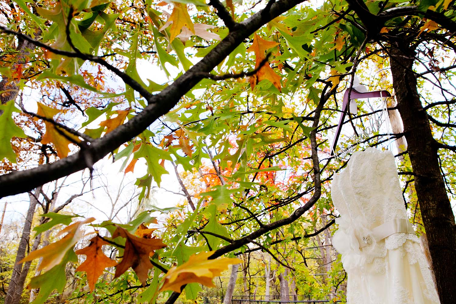 Fall wedding photography, wedding dress hanging in autumn tree, Midwest Wedding Photographers